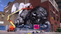 News video: Walls decorated for Canada's MURAL festival