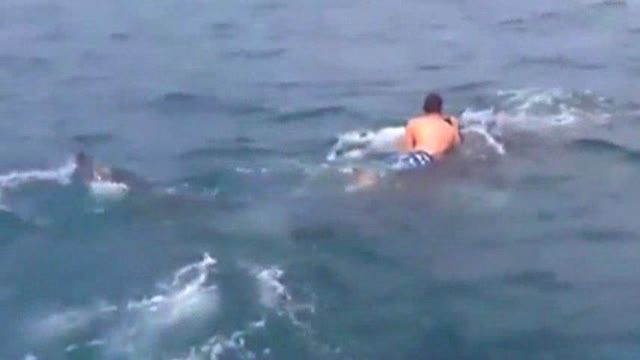 News video: Raw: Fla. Teen Catches Ride With Whale Shark